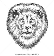 lion sketch stock images royalty free images u0026 vectors shutterstock