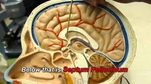 3d Head Anatomy Human Brain Anatomy Youtube