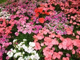 flower garden flowers in the greatindex net idolza