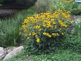 native plants for sale native new england plants new england habitat gardening blog