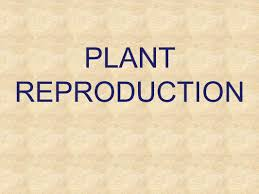 plant reproduction chapter 43 opener ppt video online download