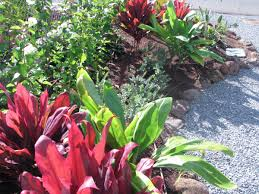 native plants in hawaii xeriscape board of water supply