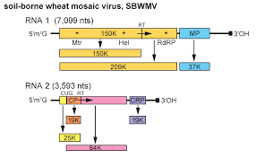 genus furovirus virgaviridae positive sense rna viruses