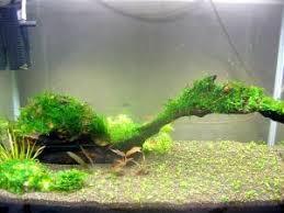 Aquascape Tank My Shrimp Tank Aquascaping World Forum