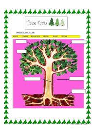 deforestation worksheet free worksheets library download and