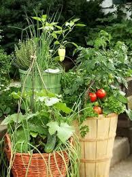 69 best container gardening images on pinterest vegetable garden