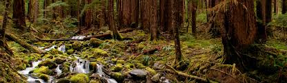 Wall Images by Olympic National Park U S National Park Service