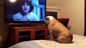 bulldog watches a horror movie does something incredible during