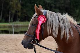 brown ribbon free photo equestrian brown ribbon free image on