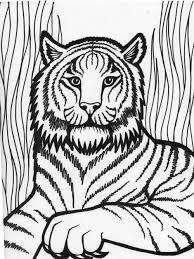 coloring page tiger funycoloring