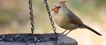 backyard birds the bird food store matthews nc
