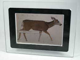 How To Frame A Print Digital Photo Frame Wikipedia