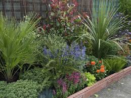 low maintenance drought tolerant low maintenance plants for desert garden easy