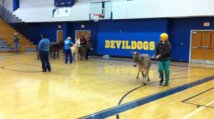 T r high school donkey basketball mov