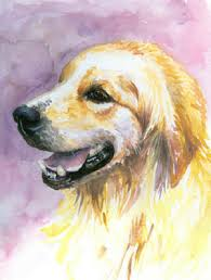 golden retriever guide a z canine breed information