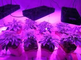 top led grow lights indoor plant lights led led vs grow lights led grow lights best led