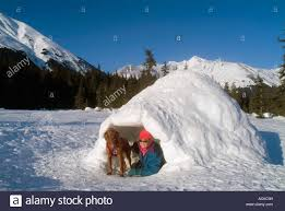 Dog Igloo Winter Hiker With Dog In Hand Built Igloo In Glacier Valley
