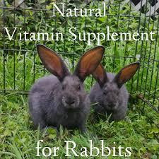 haven homestead feeding rabbits naturally organic herbal vitamin