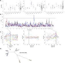genetic analysis of hematological parameters in incipient lines of