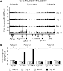 modification si e social association dynamic patterns of histone methylation are associated with