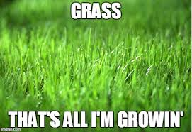 Grass Memes - grass is greener memes imgflip