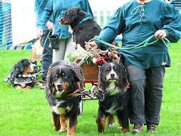 Polarion Bad Liebenzell Bad Liebenzell Zahlreiche Besucher Bei Hundemesse Bad