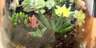 succulent terrariums tickets multiple dates eventbrite
