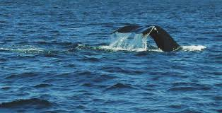 Whale Watches Cape Cod - i smelled a whale in cape cod u2013 spencerstravelblog