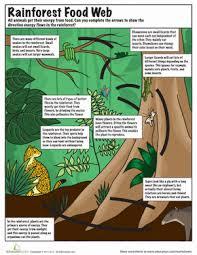 rainforest food chain worksheet education com