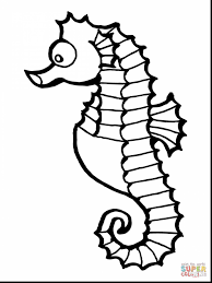 marvelous seahorse drawing outline with seahorse coloring page