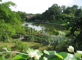Singapore Botanic Gardens Location Singapore Botanical Gardens The Most Beautiful Botanical Gardens