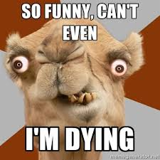 Camel Memes - 37 very funny camel memes images pictures photos picsmine
