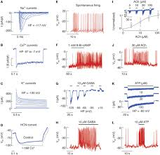 frontiers ion channels of pituitary gonadotrophs and their roles