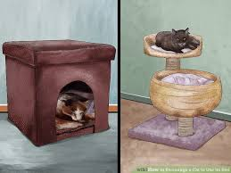 3 ways to encourage a cat to use its bed wikihow