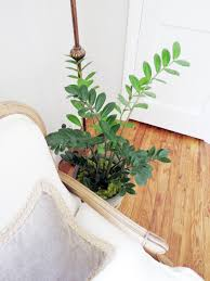home plants how to care for your house plants indigo u0026 honey