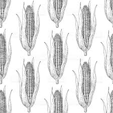 corn cob hand drawn vector seamless pattern isolated vegetable