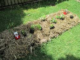 how to create a no fuss no dig vegetable garden under the mango tree