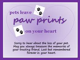 the loss of a pet sympathy for lost pet hnc