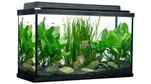 aquarium decoration ideas freshwater top 7 aquarium decorating tips home aquarium tips explore fluval