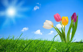 nice spring background hd 1767