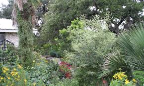 native plant gardens rock oak deer medina garden nursery