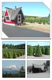 huberts trees wholesale trees