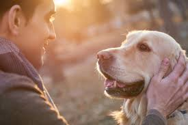 benefits of having a pet according to science reader u0027s digest