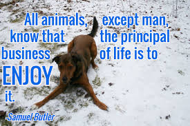 loss of pet 13 dog loss quotes comforting words when losing a friend