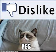 Grumpy Cat Coma Meme - grumpy cat like this fb feature grumpy cat know your meme