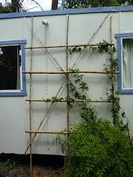 bamboo berowra backyard
