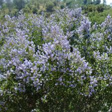 drought tolerant native plants drought tolerant plants for a santa barbara and goleta area garden