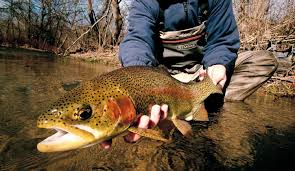 fly fishing don t overlook the trout water to you fly