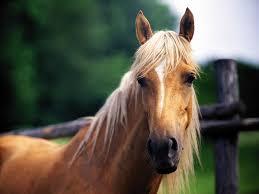 horse background free 6959259