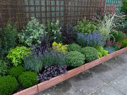 best 10 plants for a small container garden border plants